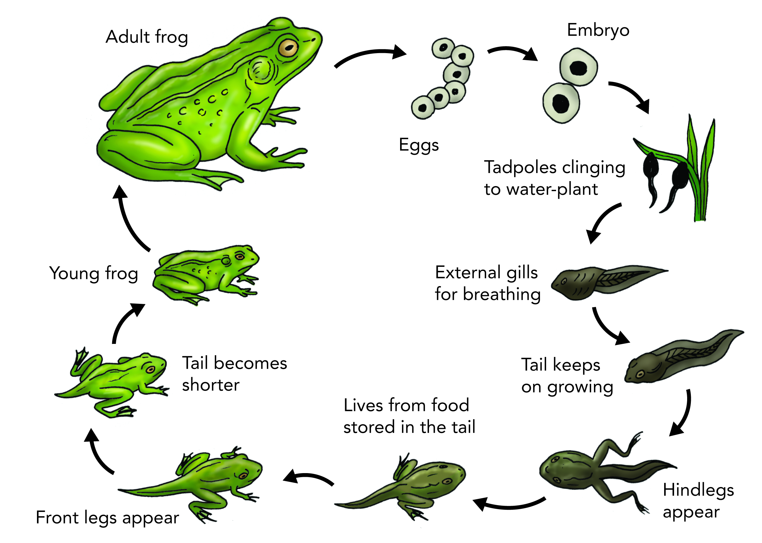 Plant And Animal Life Cycles - Lessons - Tes Teach